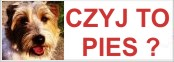 CZYJ TO PIES ?